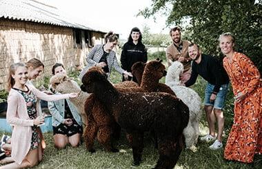 alpaca-teambuilding-1