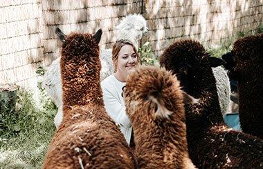 alpaca-teambuilding-2