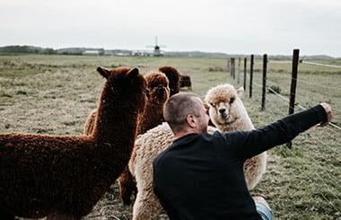 alpaca-teambuilding-3